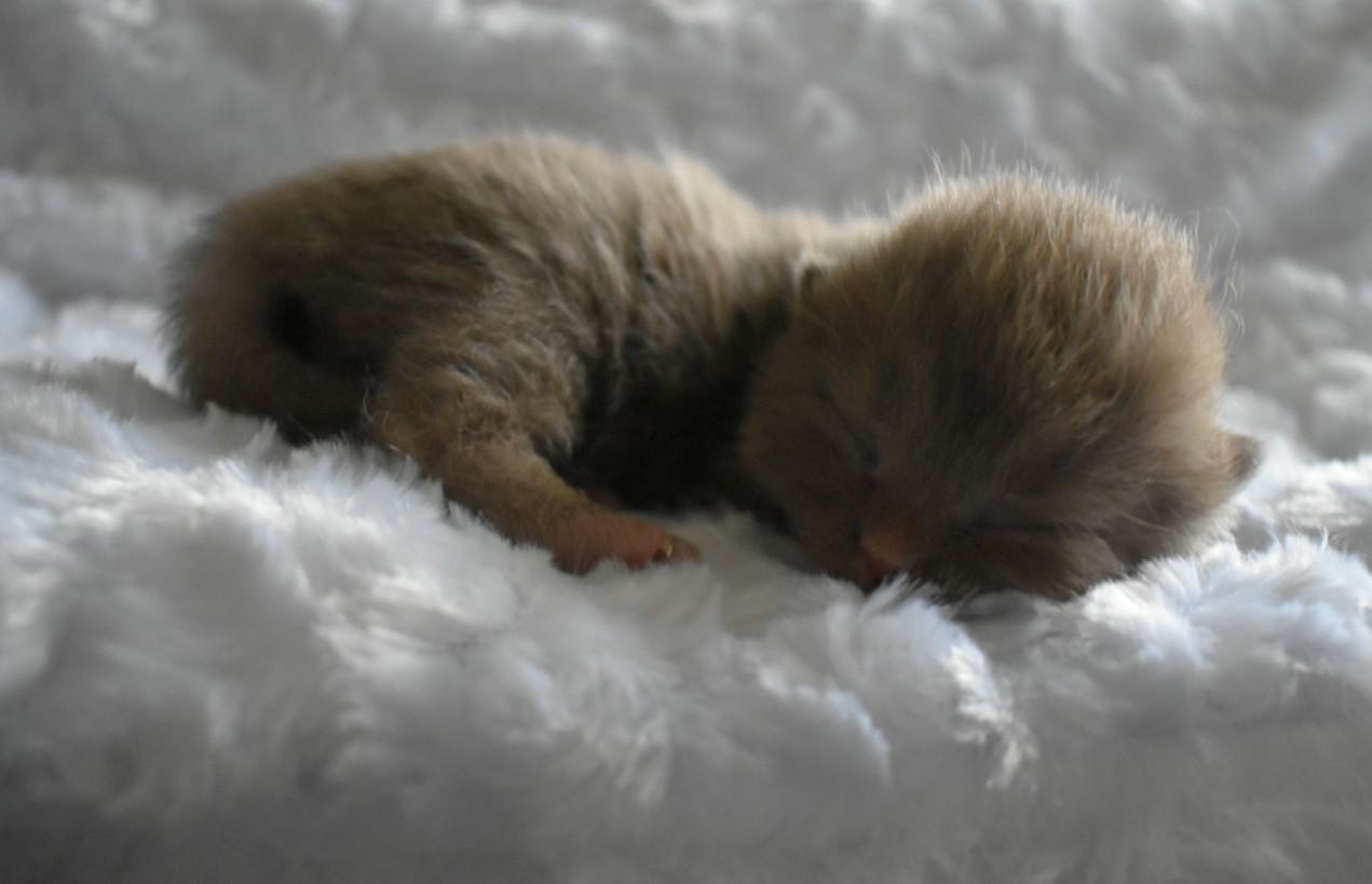 McSmitten Kittens